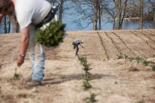 TreePlanting15002