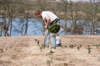 Tree Planting at sholach christmas Trees to keep a good supply of trees of all ages and sizes