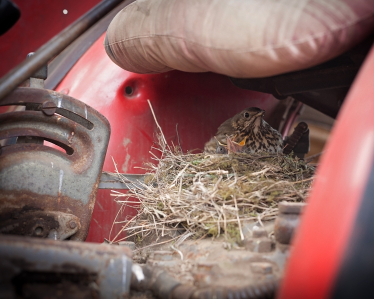 Nesting in Berry Tractor
