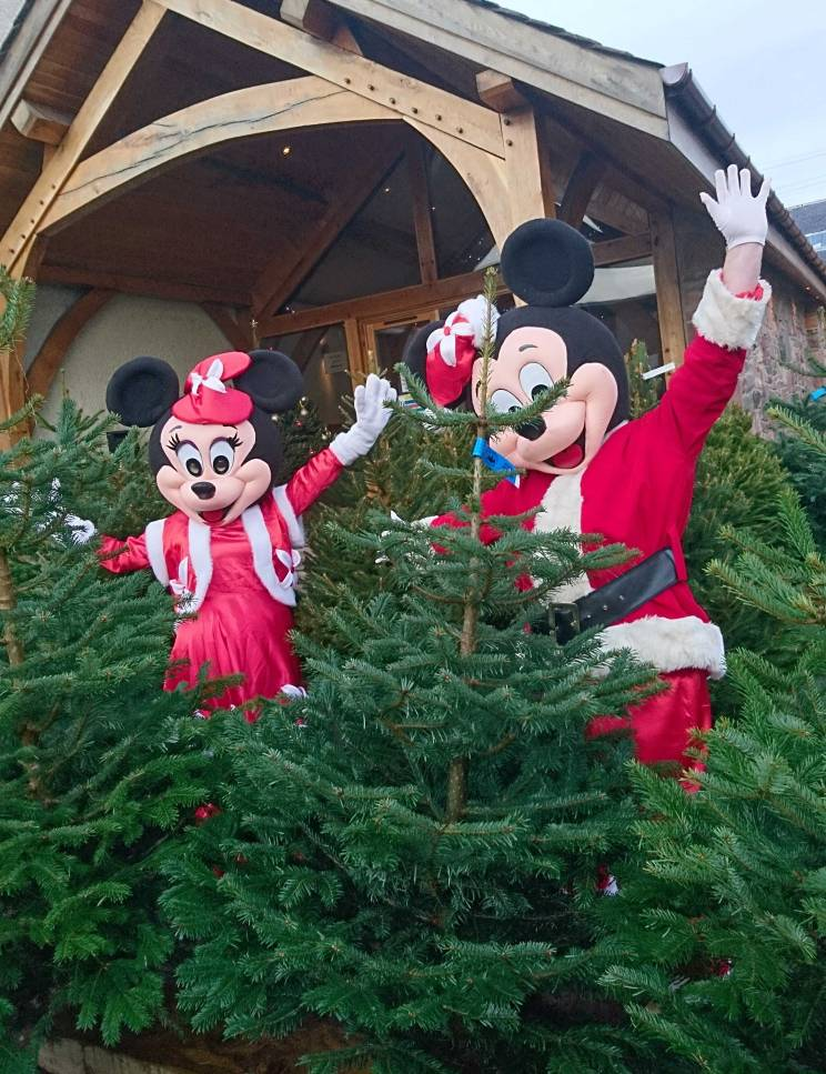 Mickey and Minney Mouse come to choose their Real Tree