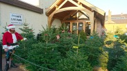 sholachtrees-christmas023