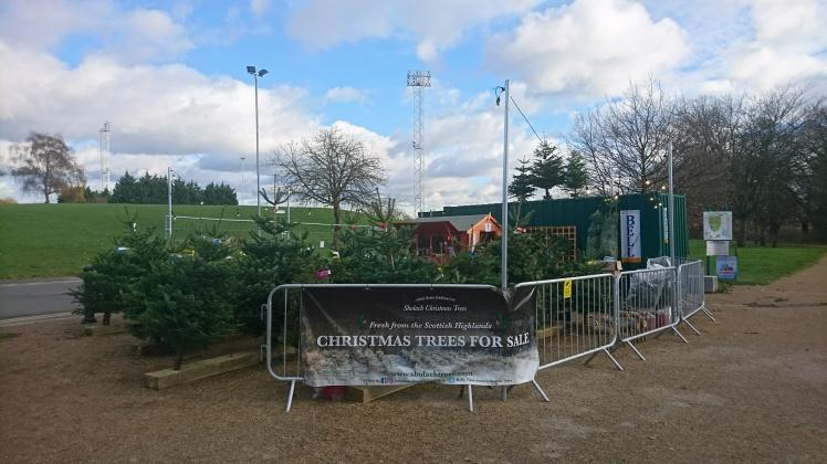 Sholach Christmas trees LondonDSC_0189