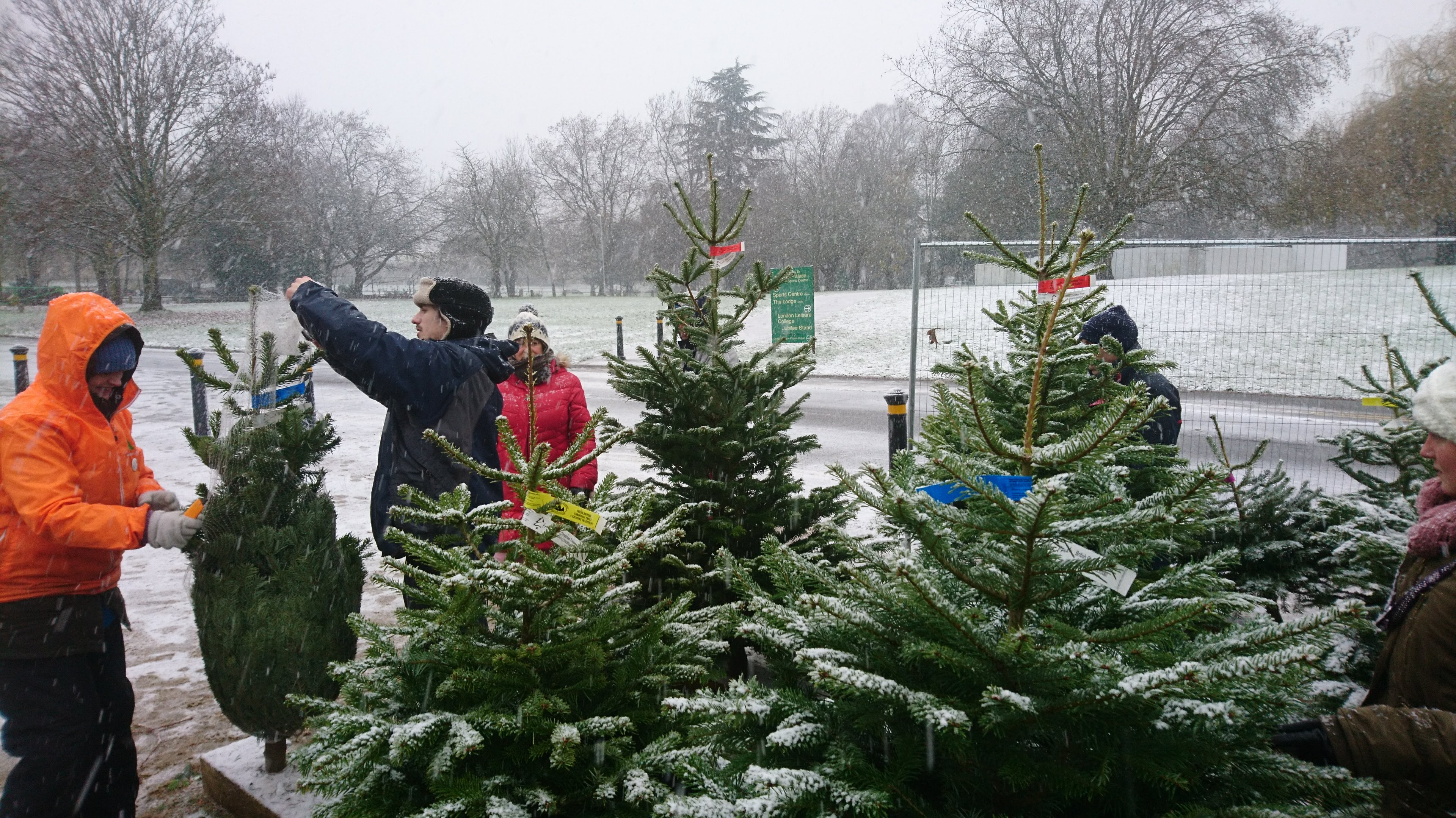 Photo And Video Gallery Sholach Christmas Trees